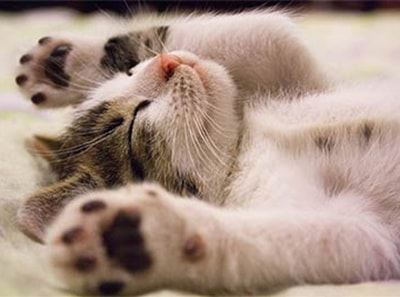 Miego įtaka regėjimui